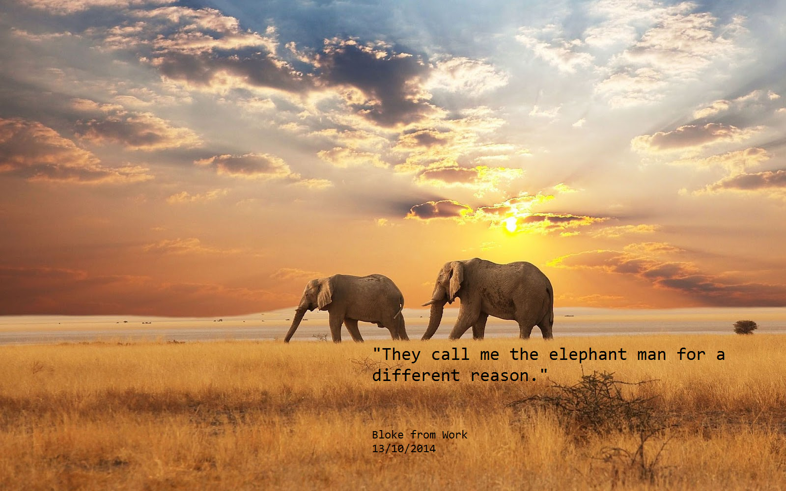 Elephant Quotes | Elephant Bloke From Work Quotes
